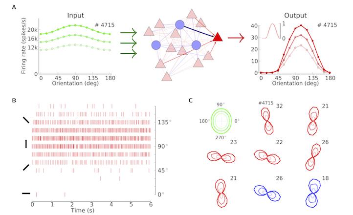 Bernstein Center Freiburg | Research: Network Models