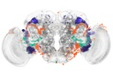 Identifying Brain Regions Automatically