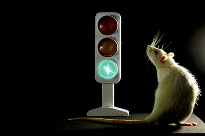 Traffic Light in the Brain: Research group offers new insights into the roles of different subareas in the prefrontal cortex