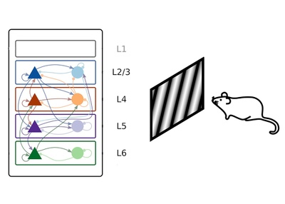 Disentangling the complex signal flow in layered networks of neocortex